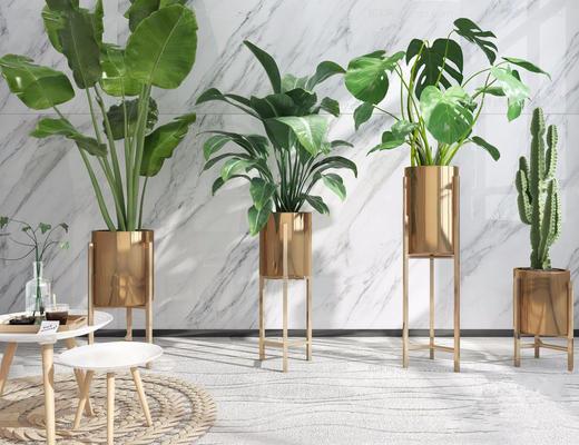 花瓶, 植物, 现代简约, 盆栽